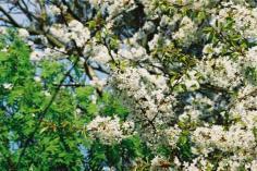 46_18_kwiatki-1
