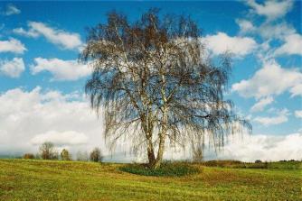 60_08_drzewo-1