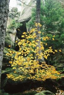 61_35_drzewo-1