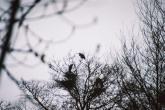 Wycieczka Ornitologiczna 2005